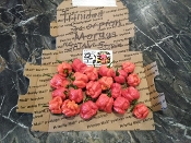 "Trinidad Scorp. Moruga ""Satan Strain"" Red Fresh Peppers - 1 SFRB"