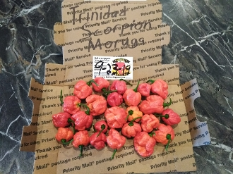 Trinidad Scorpion Moruga Red Fresh Peppers - 1 SFRB